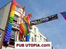 Bulldog in Brighton picture