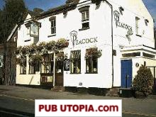 The Peacock in St Albans picture
